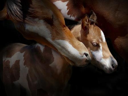 yegua: yegua y potro Foto de archivo