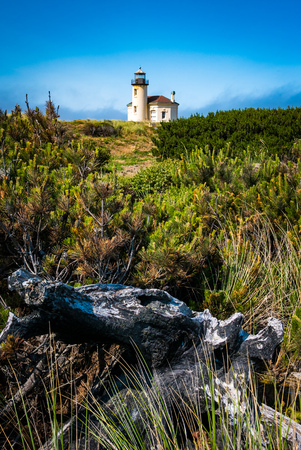 coquille: Coquille River Lighthouse in Oregon, USA as seen from land surrounded by pines and old stumps and logs.