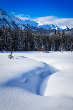 Snow covered meadow with mountains in the background in Peter Lockheed Provincial Park, in the Canadian Rockies, Alberta, Canada 版權商用圖片