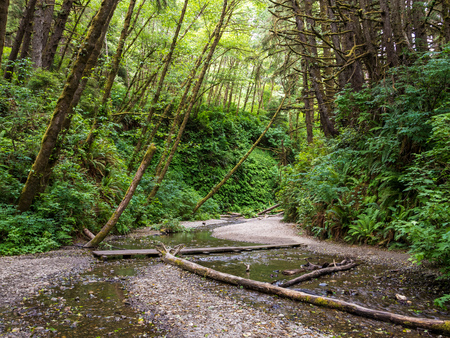 Fern Canyon in Redwood National Park