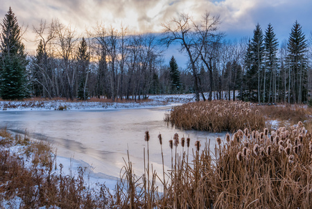 Frozen pond with cattails in Winter Stock Photo