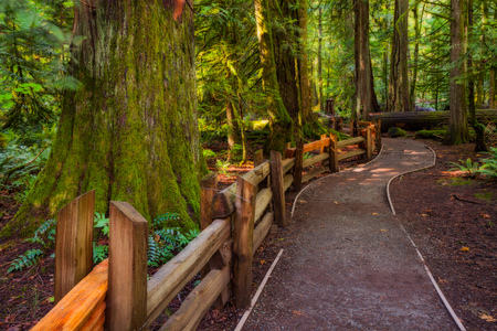 A hiking trail in the Cathedral Grove on Vancouver Island, BC, Canada