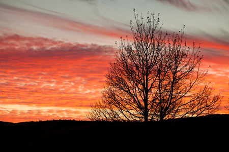 Bare tree branches silhouetted against a colorful orange sky, Alberta, Canada