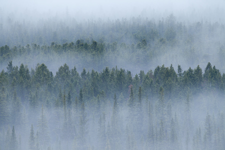 A foggy morning the forests of the Rocky Mountains of Alberta, Canada