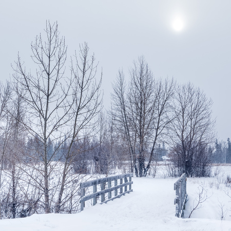 A trail in the forest on a cold winters day, Calgary, Alberta