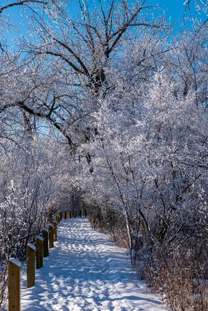 Hoar-frost covered trees in winter on a cold winter day. Banco de Imagens