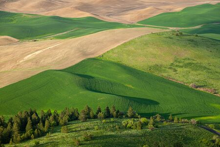 Aerial view of the farmland in the Palouse region of Eastern Washington state, USA Banco de Imagens - 130439708