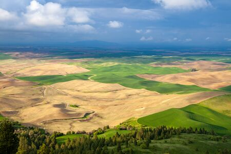Aerial view of the farmland in the Palouse region of Eastern Washington state, USA Banco de Imagens - 130439710