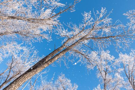 Hoar-frost covered trees in winter on a cold winter day. Banco de Imagens - 130439747