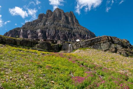 Wild flowers and mountain meadows along the Hidden Pass Trail in Logan Pass area of Glacier National Park, Montana, USA Stock Photo
