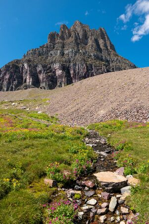 Wild flowers and mountain meadows along the Hidden Pass Trail in Logan Pass area of Glacier National Park, Montana, USA Banco de Imagens - 132706504