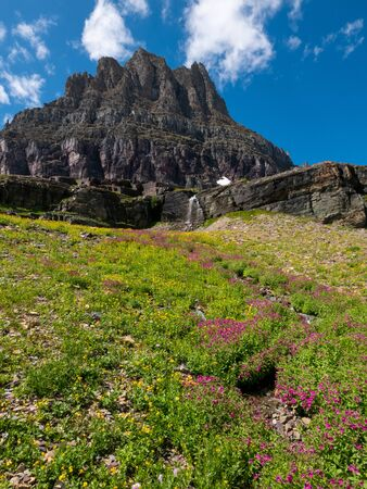 Wild flowers and mountain meadows along the Hidden Pass Trail in Logan Pass area of Glacier National Park, Montana, USA Banco de Imagens - 132715023