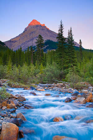 Last Light on Mount Weed, Banff, National Park, Alberta, Canada with a creek and wild flowers in the foreground