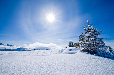 Snow covered winter landscape with the sun and blue sky near Sunshine Meadows in Banff National Park, Alberta, Canada