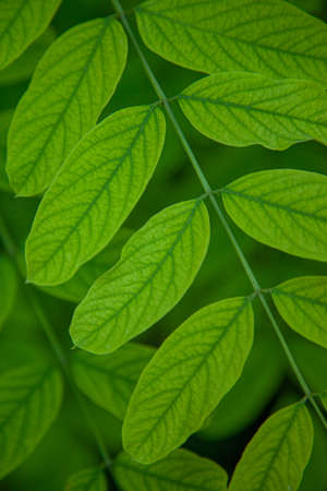 An abstract background of green leaves and stems