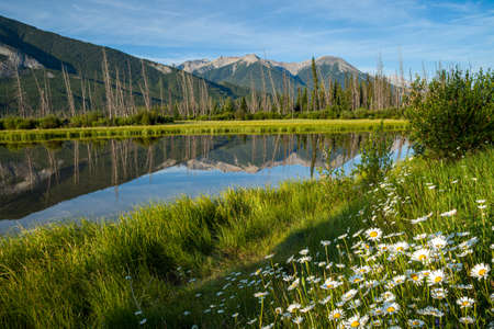 Wildflowers at Vermilion Lakes in Banff National Park, Alberta, Canada
