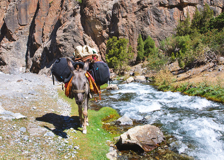 burro: Burro en las mochilas cargadas de r�os de monta�a. Tayikist�n senderismo Foto de archivo