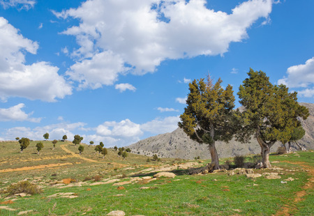 inhospitable: Juniper Tree growing out of the Rosks against the blue sky and white clouds Turkey