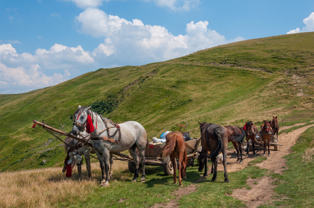 cartage: pair of horses and an old cart in the Carpathians