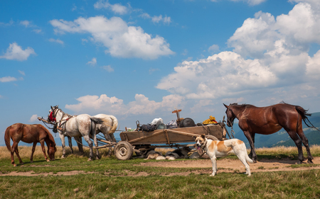 pair of horses and an old cart in the Carpathians