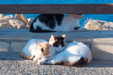 relatives: Three cats. Homeless cats, sitting together in a brick wall. Family, relatives or just friends. Stock Photo