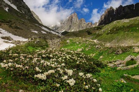 svaneti: Grassy valley and snow-capped mountains in Georgia Svaneti