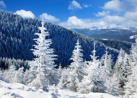 Winter landscape with snow-covered fir trees in the foreground