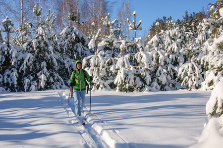 woman in outdoors clothes is riding on wooden skis in beautiful snowy pine forest
