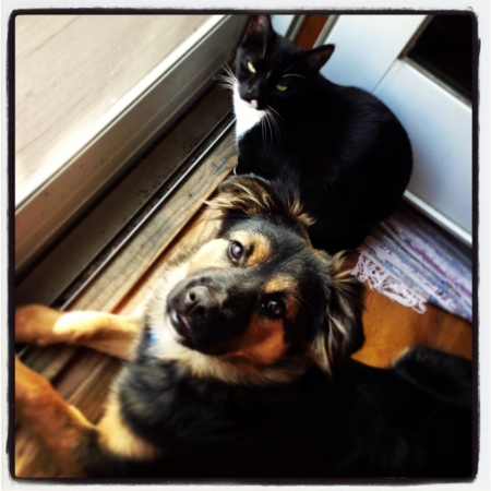 otganimalpets01: Cats and dogs love each other