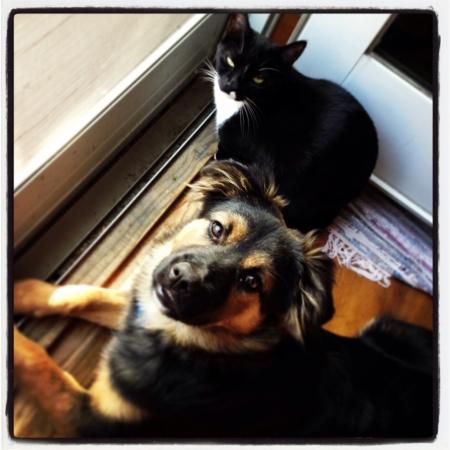 Cats and dogs love each other Reklamní fotografie - 20831388