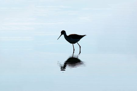 wading: Wading Bird Silhouette Reflected in Blue Water