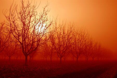 industry moody: Orange Sunrise Through a Grove of Bare Walnut Trees in Morning Fog