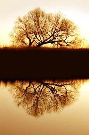 Lone, Bare, Golden Winter Riparian Willow Silhouette Reflected on Still Slough Waters of Wildlife Refuge, Central California photo