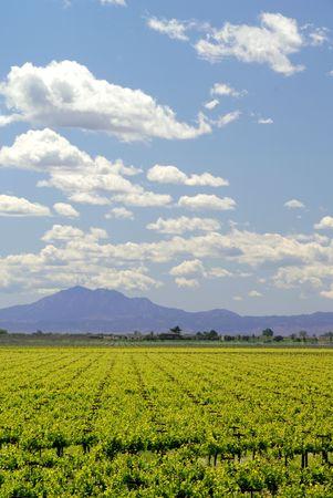 san joaquin valley: Grapevines under Mount Diablo and Spring Clouds, San Joaquin Delta, Central Valley, California