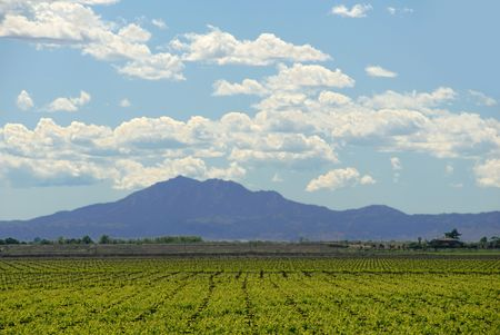 Grapevines under Mount Diablo and Spring Clouds, San Joaquin Delta, Central Valley, California