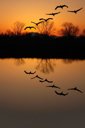 Silhouette of Endangered Sandhill Cranes and Golden Sunset Reflected in Wildlife Pond, San Jaoquin Delta, California Stock Photo
