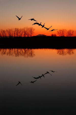 birds lake: Silhouette of Canadian Geese and Red Sunset Reflected in Wildlife Pond, San Jaoquin Delta, California