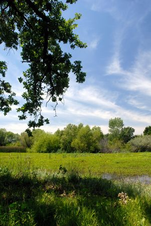 shady: Green Summer Meadow, Oak Branch, and White Stratus Clouds Under Blue Sky  Stock Photo