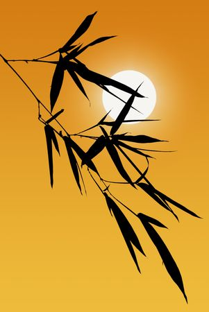 silhouetted: Shoot of Black Bamboo Leaves Silhouetted Against Golden Afternoon Sky and Setting Sun