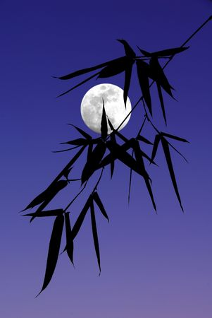 silhouetted: Shoot of Black Bamboo Leaves Silhouetted Against Blue Evening Sky and Full Moon