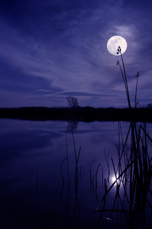 Moon and Silhouette of Reeds Reflected in Still Pond at Night