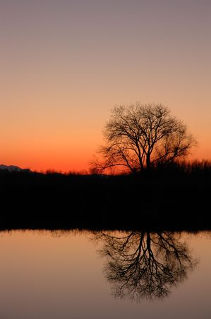 california delta: Natural Reflection of Silhouetted Tree Against Magic Hour Sunset, San Jaoquin Delta, California