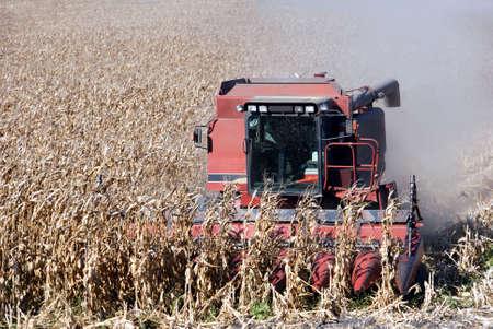 Combine Harvesting Ripe Corn