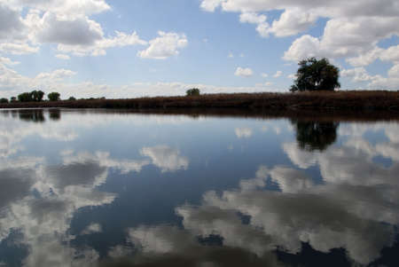 puffy: Reflection of White Clouds in Wildlife Pond