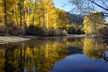 Western Freemont Cottonwood Trees in Autumn Color, Reflected in River,  Kennedy Meadows, Sierra Nevada Stock Photo - 2037061