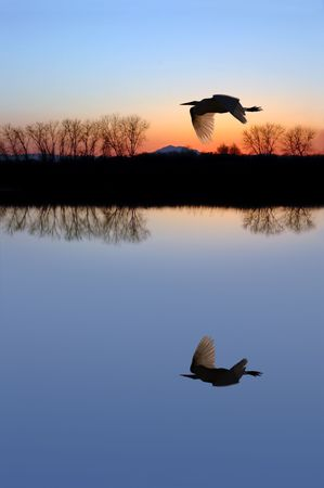 Winter Shilouette of White Egret Flying over Wildlife Pond photo