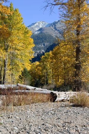 sierra snow: Dust of Snow On Mountain Peak and Western Freemont Cottonwood Trees in Autumn Color, Kennedy Meadows, Sierra Nevada Stock Photo