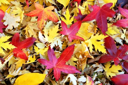 Autumn Leaves in Natural State photo
