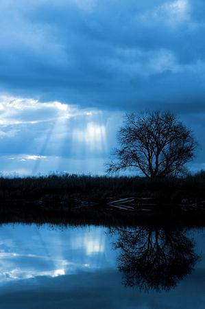 Lone Winter Tree and Sun's Rays Reflected in Wildlife Refuge Pond Stock Photo - 2274428