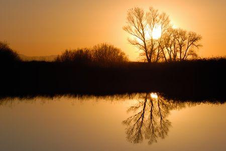 Reflected Tree in Golden Setting Sunlight at Wildlife Refuge Stock Photo - 2601778